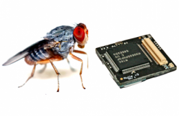 Inspired by insect intelligence
