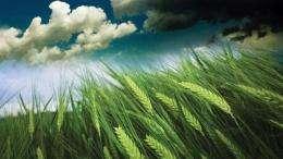 Invigorating plants
