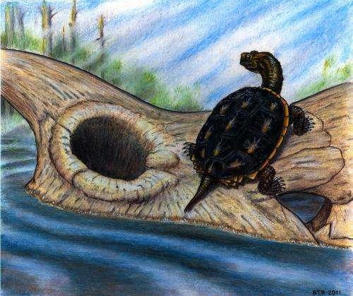 Tough turtles survive cretaceous meteorite impact