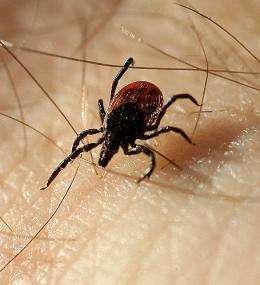Lyme disease -- why do some fare better than others?