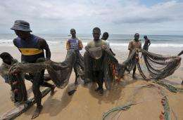 Massive piles of seaweed have washed ashore along Sierra Leone's coastline, raising fears for the fishing industry