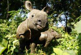 Nepalese rhinos are poached for their horns, which are prized for their reputed medicinal qualities