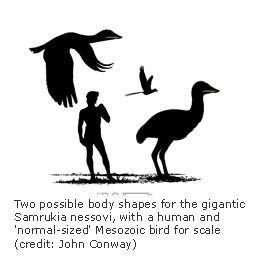 New fossil lends weight to giant bird theories