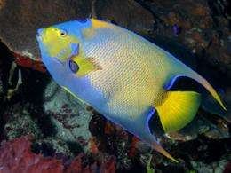 New study on tropical fish dispersal