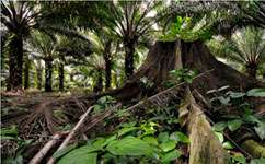 Oil palms and conservation -- do they mix?