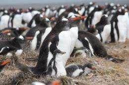 Only few seabird species contract avian malaria