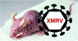 Origins of XMRV deciphered, undermining claims for a role in human disease