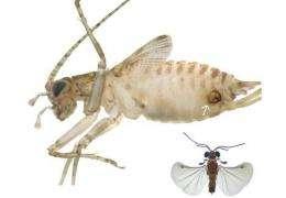 Parasite lives 'double life'