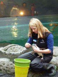 Penguin keeper Mallorie Hackett tries to feed a blue penguin at a refuge in Christchurch