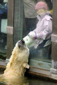 "Polar bear Knut interacts with six-year-old visitor Nane and her cushy polar bear ""Knut"" at the zoo in Berlin in 2010"
