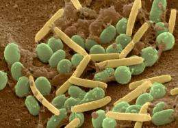 'Policing' stops cheaters from dominating groups of cooperative bacteria