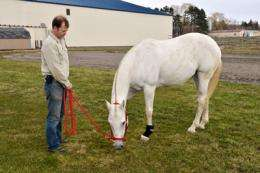 Portable ultrasound now available for horses