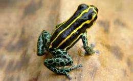 Predators drive the evolution of poison dart frogs' skin patterns