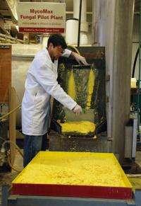 Process could improve economics of ethanol production