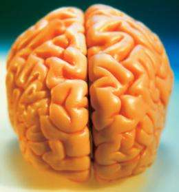 Repeated stress produces long-lasting resistance to stroke damage in the brain