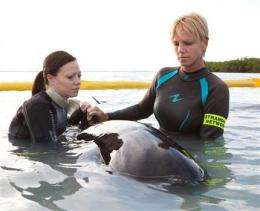 Rescuers tend to whales stranded off Florida Keys (AP)