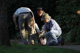 Rescuers trap hawk with nail in head in SF park (AP)