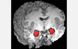 Researchers selectively control anxiety pathways in the brain