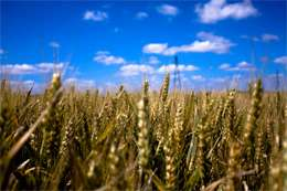 Research yields world food potential
