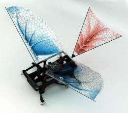 Robotic bug gets wings, sheds light on evolution of flight