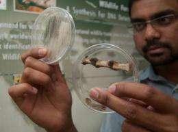Saving wildlife with forensic genetics