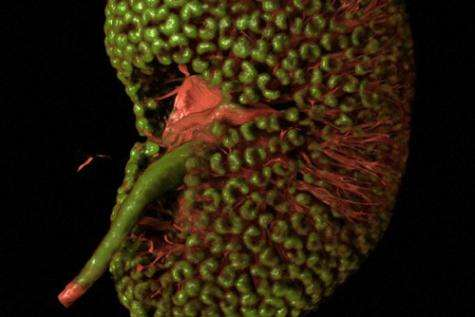 Scientists' prize-winning images rich with detail, data