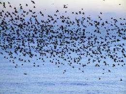 Secrets of flocking revealed