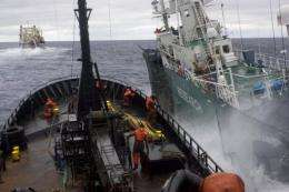 See Shepherd regularly shadows and harasses Japanese whalers