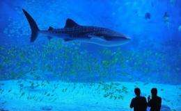 Sharks inhabiting Australia's Great Barrier Reef are in decline due to over fishing, researchers have warned