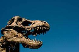 Small Asian dinosaur actually a juvenile tyrannosaur, not separate species, researchers say