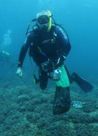 Soft coral builds strong reefs