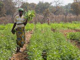 Mapping underground water sources for drip irrigation could transform African village life