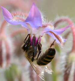 Solving the mystery of the vanishing bees.