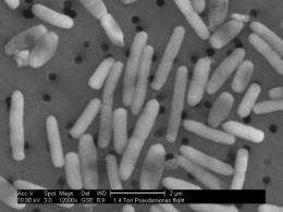 Spacebound bacteria inspire earthbound remedies