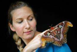 Staff member Jo Maxwell with an Atlas moth at Kew Gardens in London in May