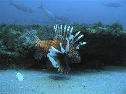 St Maarten finds local lionfish tainted with toxin (AP)