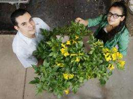 Studies give growers tools to bring new tropical plant to Indiana