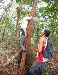 Study: New Method Can Aid Rainforest, Help Loggers