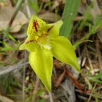 Study will determine whether viruses can help orchids