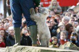 "Stuffed toy ""Knut"" bears sold out several times over, the cub made it onto the cover of glossy magazine Vanity Fair"