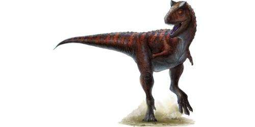 Super-sized muscle made twin-horned dinosaur a speedster