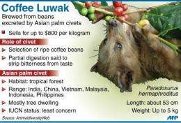 The civet cat's digestive process gives the famed flavor to Luwak, the world's rarest and most expensive coffee