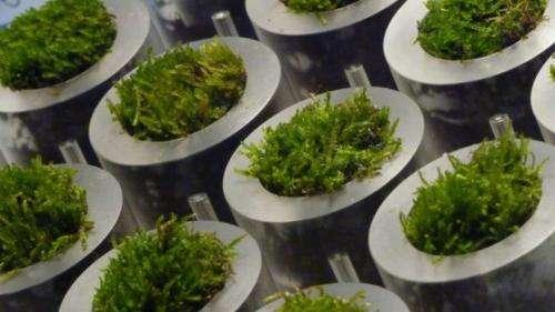 The hidden power of moss