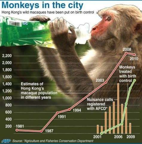 The macaque population has reached more than 2,000 in recent years
