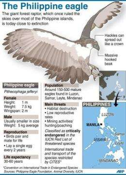 The Philippine eagle is one of the world's rarest and most critically endangered birds
