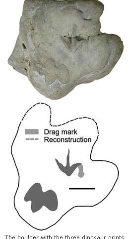 Three dinosaur footprints discovered on one boulder