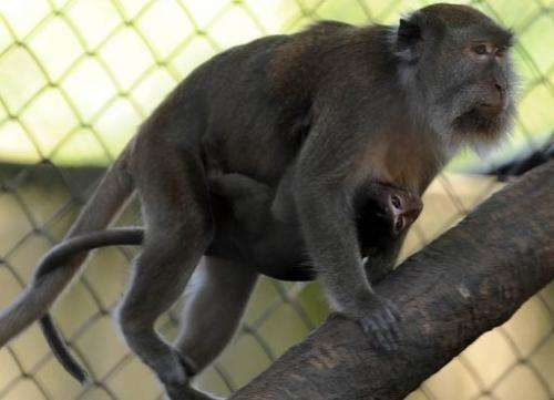 Traders sold more than 260,000 long-tailed macaques between 2004 and 2008