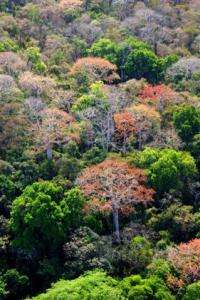 Tropical forests are fertilized by air pollution