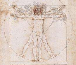 Uncovering Da Vinci's rule of the trees