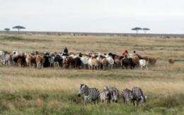 Zebras vs. cattle: Not so black-and-white